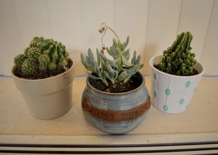 Roommates Sadie Prowell and Autumn Gehman decorated their windowsill with these cute plants.